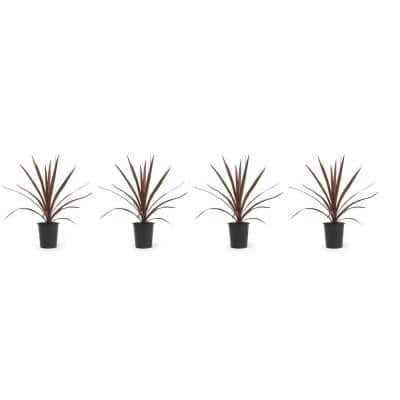 1 Qt. Cordyline Dracaena Red Star Plant in Grower's Pot (4-Pack)