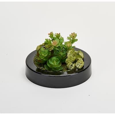 7 in. Dish Garden of Succulents in Round Black Plastic Container
