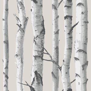 Birch Tree Multi-Color Wallpaper Sample