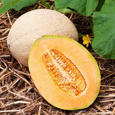 19.3 oz.Cantaloupe-Hales Best Jumbo