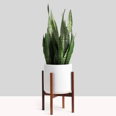 15 in. White Ceramic Cylinder Planter with Medium Wood Stand (10 in., 12 in. or 15 in.)