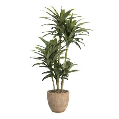 Indoor 6.5 ft. Dracaena Tree in Round Planter