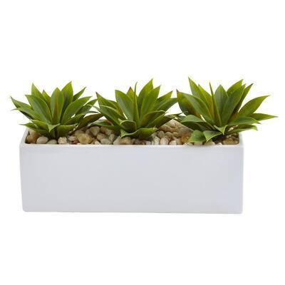 7 in. Agave Succulent in Rectangular Planter
