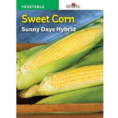 Corn Sweet Sunny Days Hybrid Seed