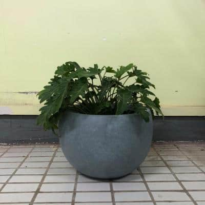 Large 19.7 in. x 19.7 in. x 13 in. Cement Color Lightweight Concrete Bowl Planter