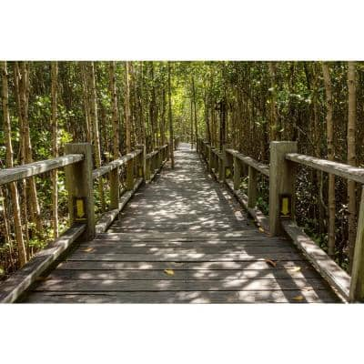 Photographic Mangrove Forest Landscapes Wall Mural