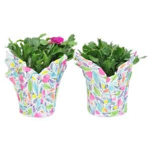 6 in. Fresh Christmas Cactus Grower's Choice - Pink, Red or White (Live 2-Pack)