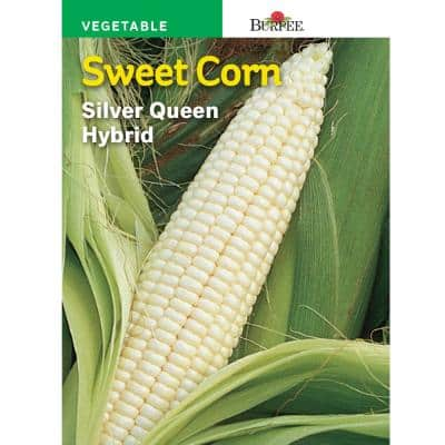 WP Corn White Silver Queen Hybrid Seed