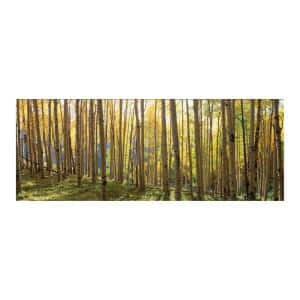 63 in. x 24 in. ''Sunlit Colorado Trees'' Tempered Glass Wall Art