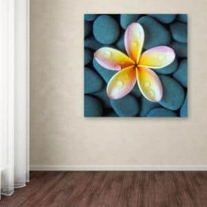 35 in. x 35 in. ''Plumeria and Pebbles 4'' by David Evans Printed Canvas Wall Art