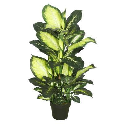 40 in. Dieffenbachia with Pot-Green White