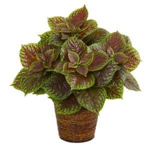 16 in. Coleus Artificial Plant in Basket (Real Touch)