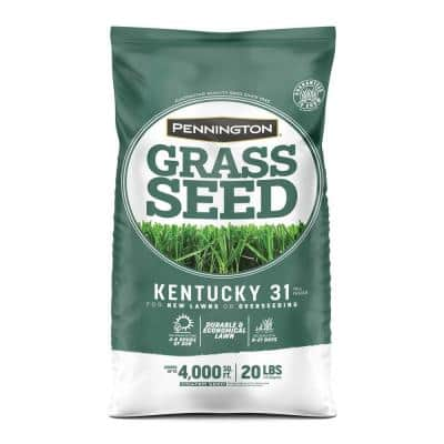 20 lbs. KY 31 Fescue Grass Seed
