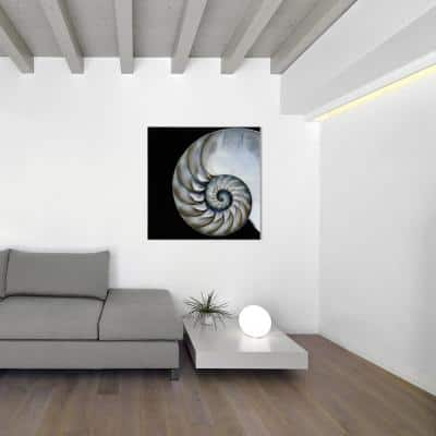 """36 in. x 36 in. """"Pearly Nautilus"""" Frameless Free Floating Tempered Glass Panel Graphic Wall Art"""