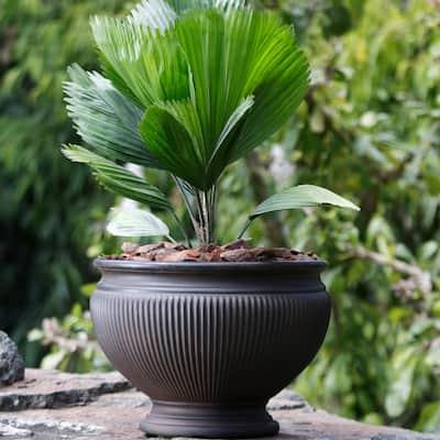 16 in. Rust Single Elizabeth Resin Outdoor Flower Pot Planter