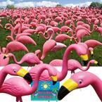 Pink Flamingo (50-Pack)