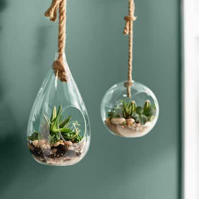 Pear 5 in. x 9 in. Glass Hanging Terrarium